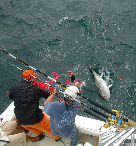 Trolling spreader bars and splasher bars is a proven way to catch bluefin tuna. Some days, it's the only way. (photo by Matt Rissell)