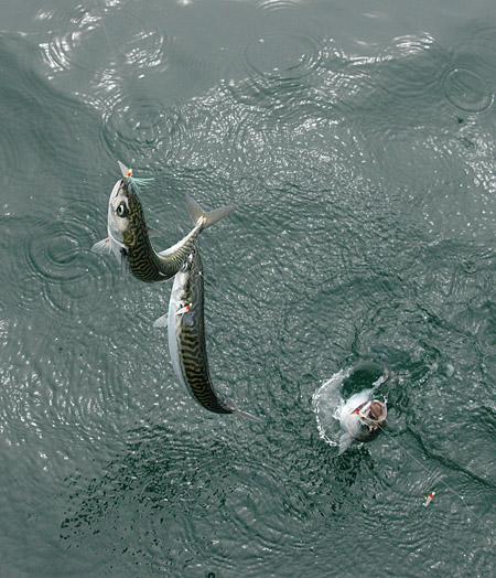 Attack line Sabiki Sea Fishing Boat Trolling Mackerel Suri Looks Line Longa