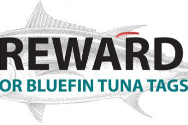 bluefin_rewards_1