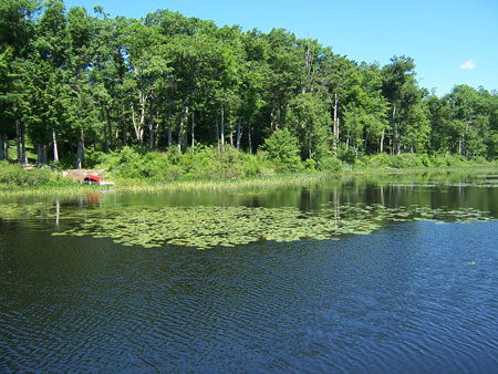 An isolated stand of lily pads is perfect for targeting with a topwater frog.