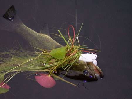 You can throw a weedless frog into the thickest of cover; just make sure you have a stout rod and braided line to pull it back out with a bass attached.
