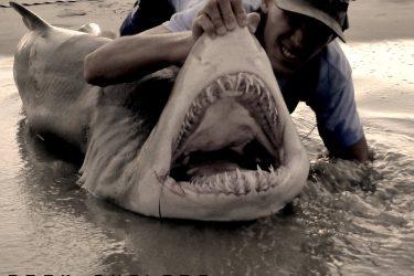 Apex Anglers Sand Tiger