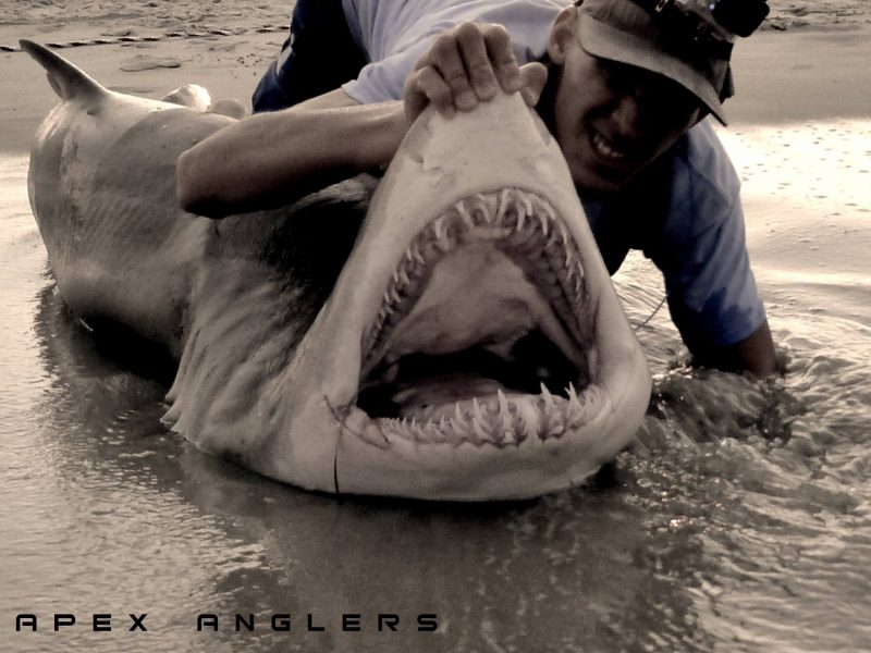 Jersey Shore Sand Tiger Sharks - On The Water