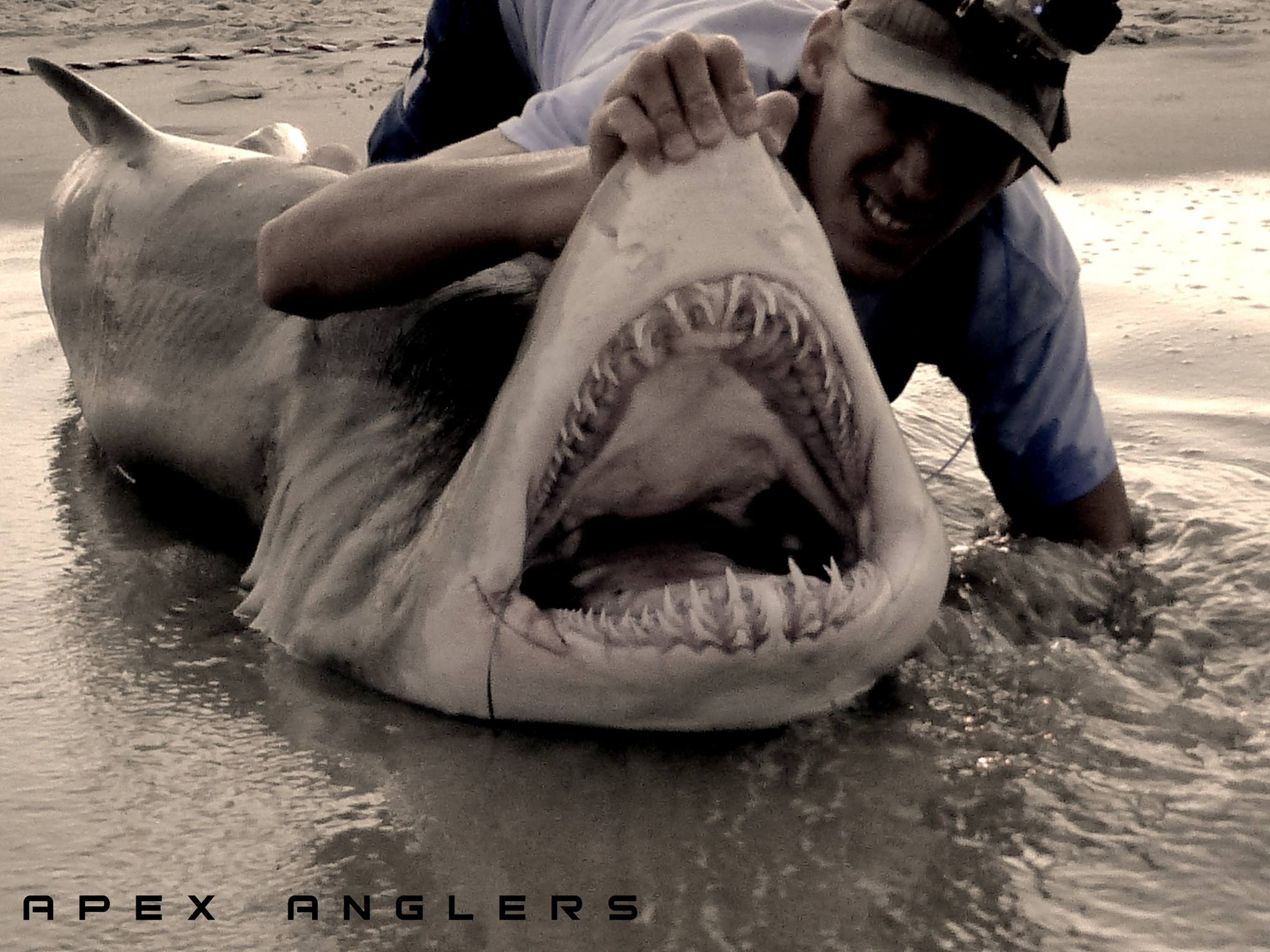 Jersey shore sand tiger sharks on the water for Nj shore fishing report