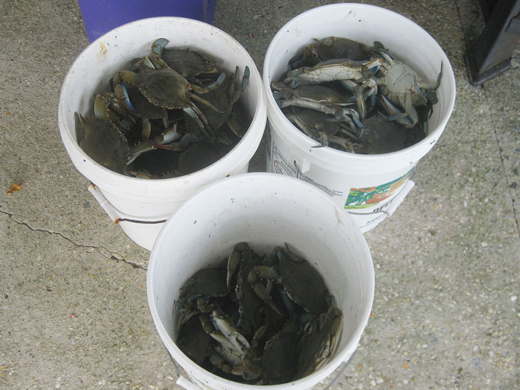Crabs will spoil quickly, so be ready to cook them soon after getting off the water.