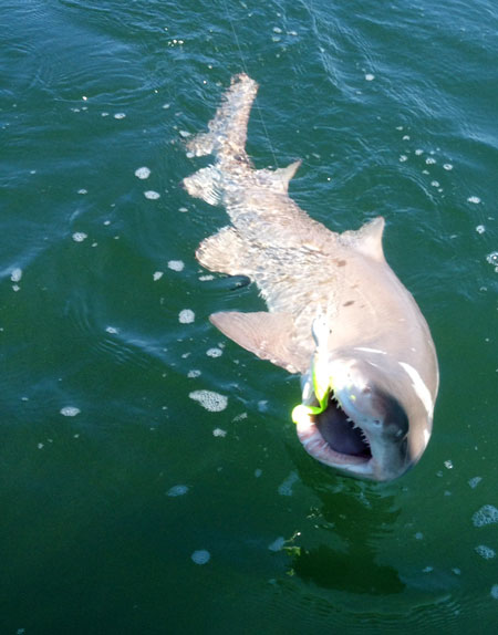 Long island new york fishing report for 8 28 14 on the for Long island sound fishing report