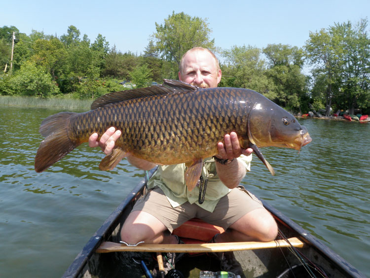 Carp grow huge, presenting a great challenge for fly fishermen.