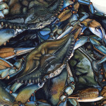 Crazy for Blue Crabs