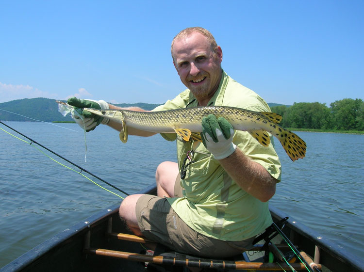 Gar congregate in shallow bays in spring, making great sight-casting targets.
