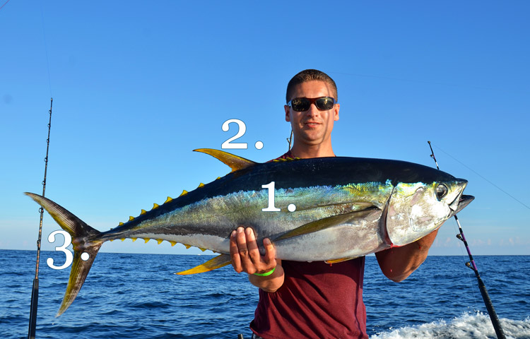 Identifying bluefin vs yellowfin tuna on the water for Yellow tail fish