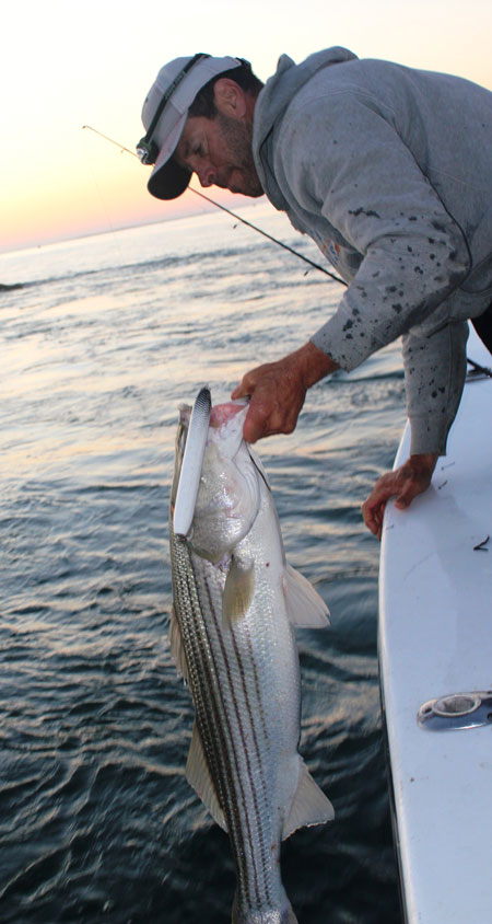 Nice striper hooked with the RM Smith Jackhammer
