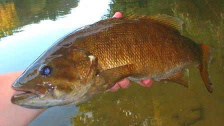 Southeastern Pennsylvania Fishing Report September 24