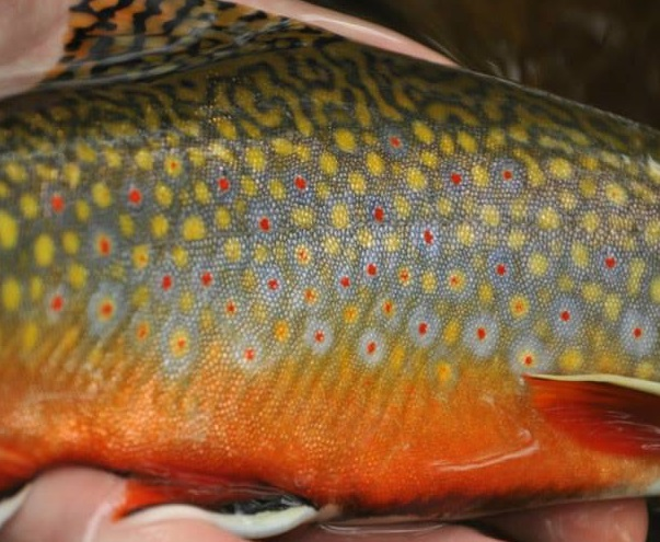 Northern pennsylvania fishing report september 24 2014 for Pa fish records