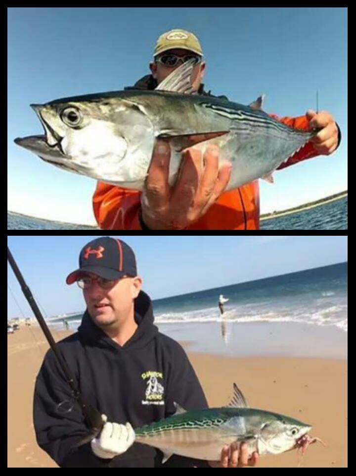 Pictured is Brian Kirby and Mike Coats with some albies from both boat and the surf.