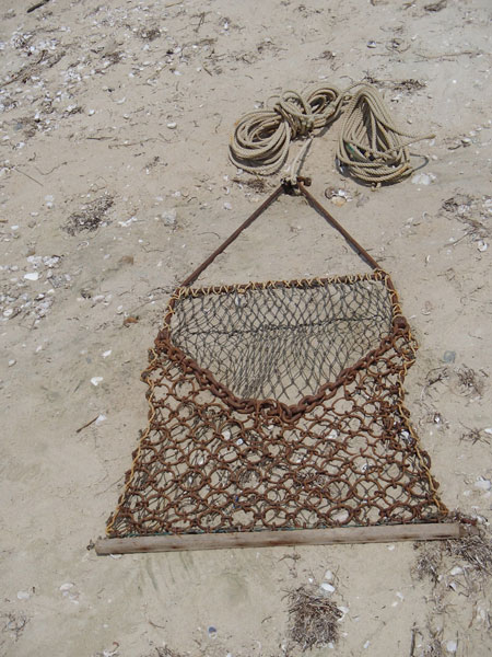 in areas where dragging is permitted, a chain drag like this one can be used by recreational scallopers to harvest their daily limit.