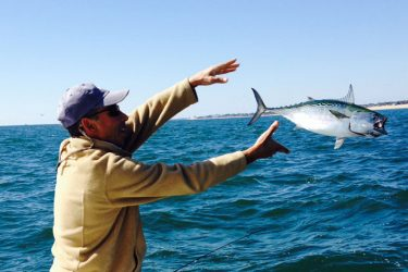 Jack Oliveri from Watch Hill, RI with a nice albie release while fishing off Weekapaug Breachway during a two hour frenzy.