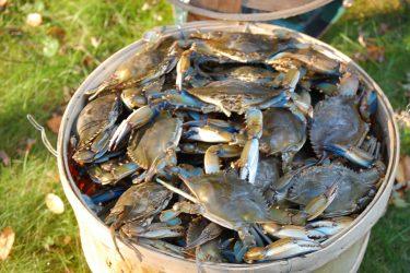 crabs october 004