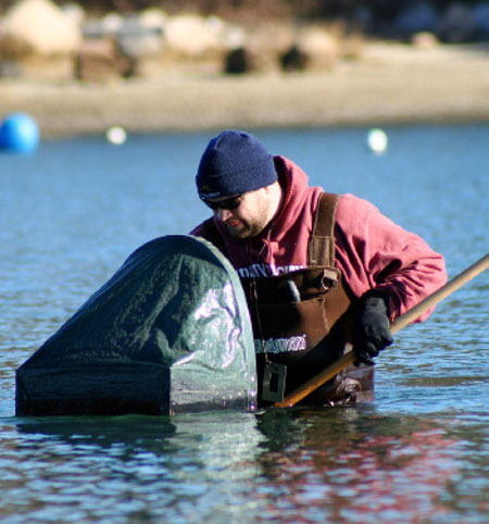 The most popular method of collecting bay scallops involves the use of a hood. A hood is a contraption with a Plexiglas window that allows you to see everything on the bottom.