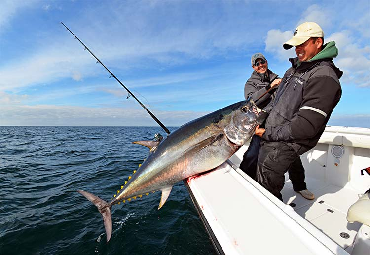 """Jimmy and Bobby with a nice 63"""" fish taken on top water with spinning tackle. Over two days of filming, the Reel Deal crew enjoyed excellent fishing, bringing 4 bluefin to the boat."""
