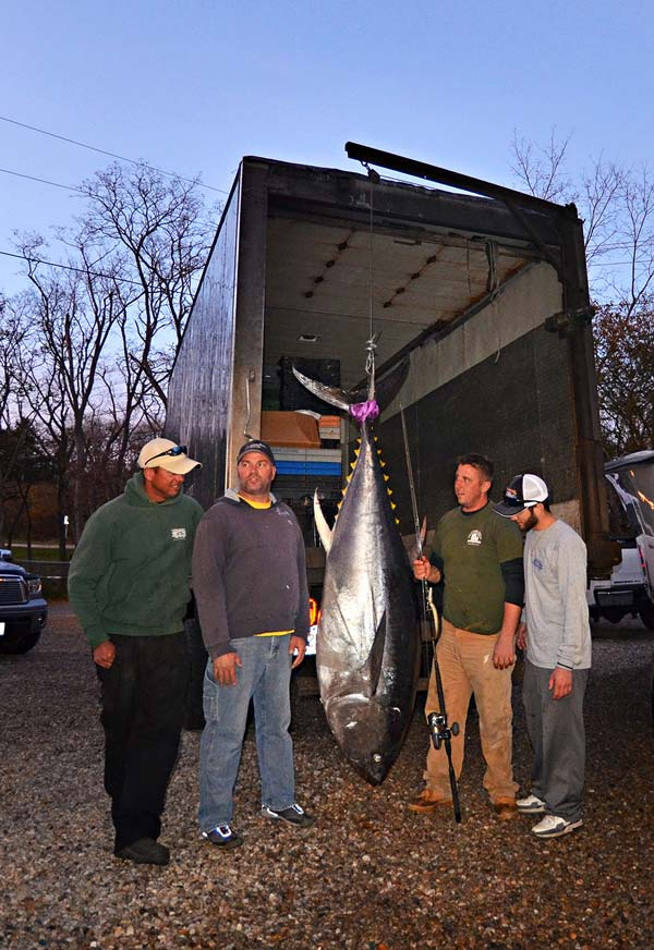 It has been a record breaking year for bluefin on spinning gear, starting with Bobby's 400+ pound fish, broken by Dom Petracras 600+ pound fish just a few days later. Here, the crew stands with a 365-pounder.