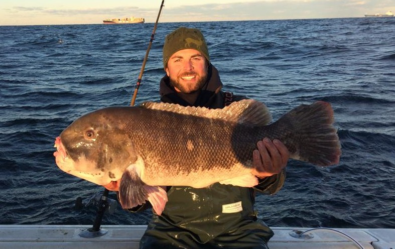 Potential new york state record blackfish on the water for Nys freshwater fishing license