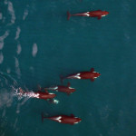 Scientists to Use Drones to Track Tuna