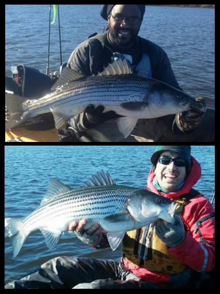 Shawn Barham and Sam Smith showing off some solid stripers on their kayaks.