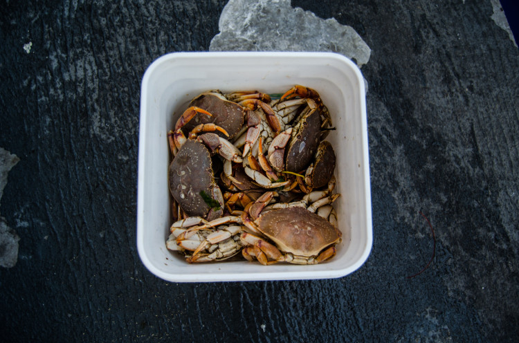 It's tough to beat white-legger crabs for winter blackfishing.