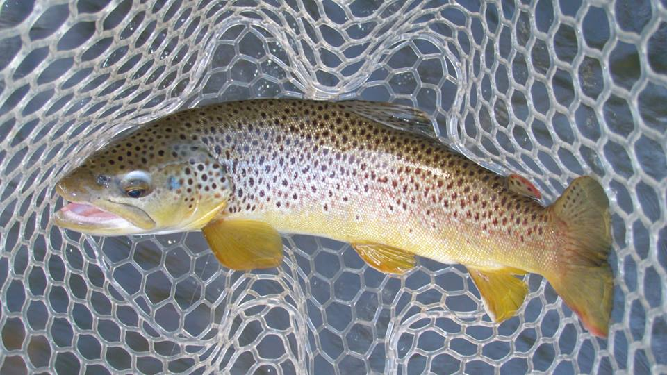 Northern pennsylvania fishing report december 18 2014 for Pa fish records