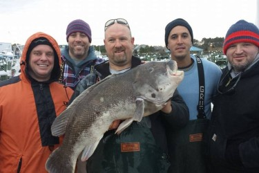 Tautog World Record Blackfish group