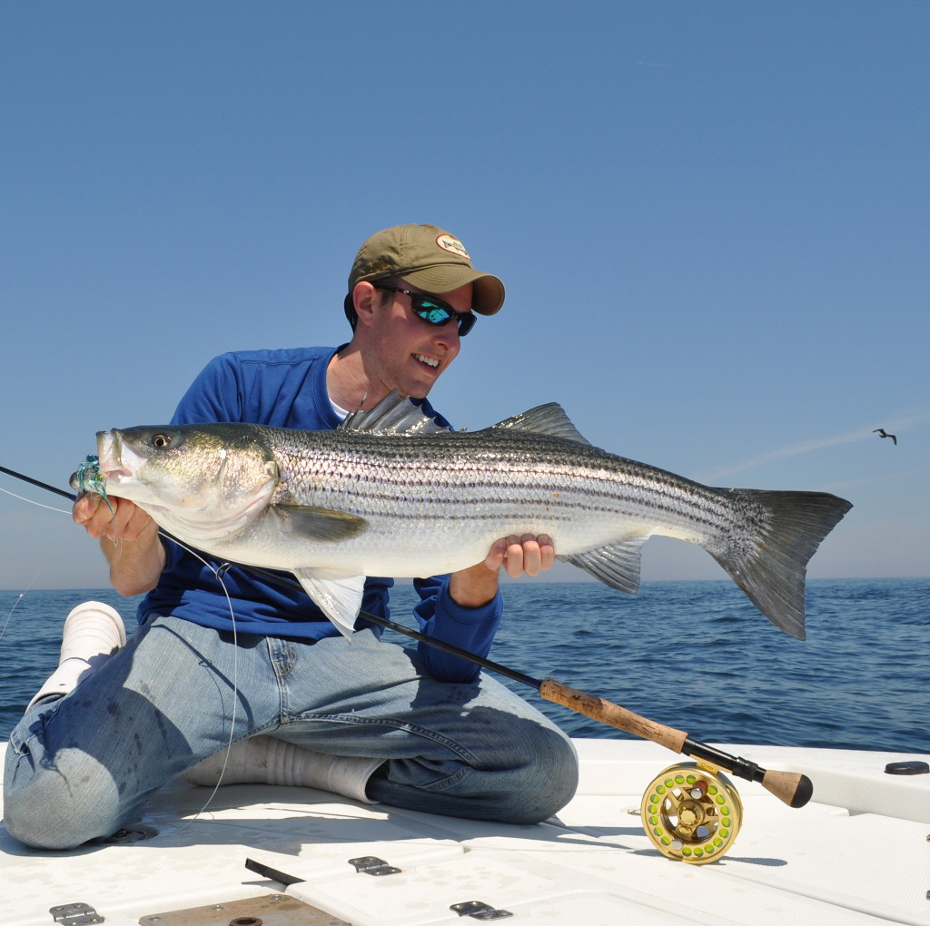 2015 striped bass regulations by state on the water for Ri fishing regulations