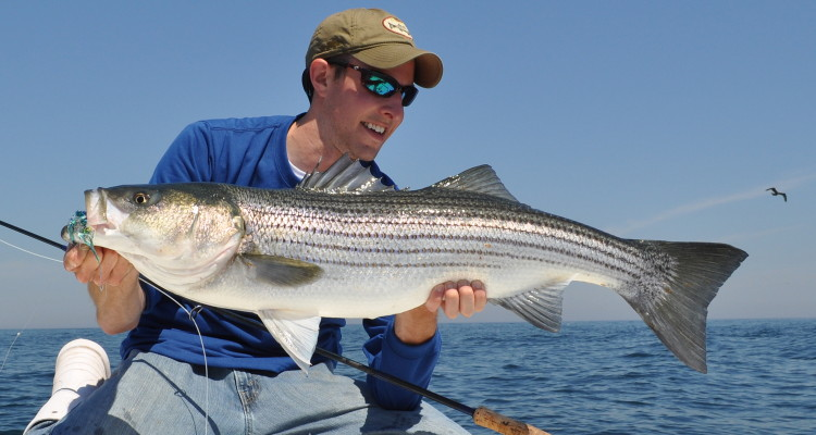 Nys striped bass fishing regulations for Nys fishing seasons