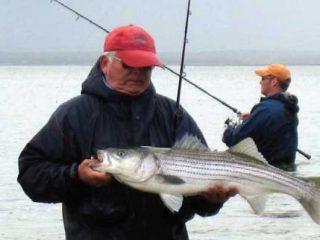Cape Cod Salties