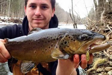 Farmington River brown trout