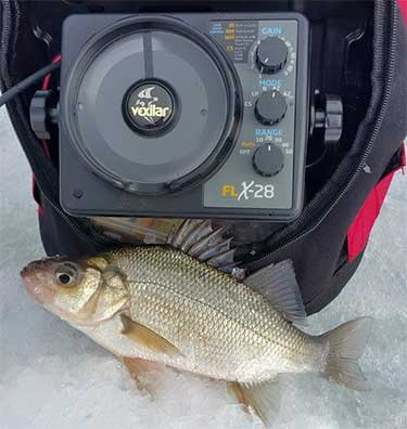White perch have been active in coves