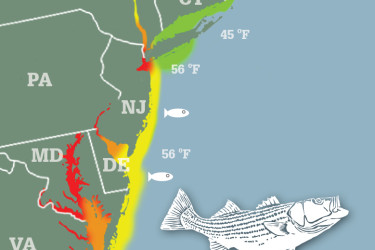 Striped Bass Migration Map