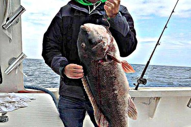 In this photo, posted on the Fishin' Fever Sportfishing Facebook page, angler Frank LaMorte holds a 25.37-pound blackfish that could be the new NJ state record.