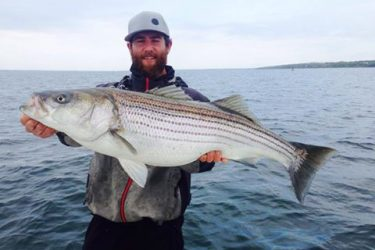 Captain Rob of Newport Sportfishing Charters with one of the larger local bass from this past week.