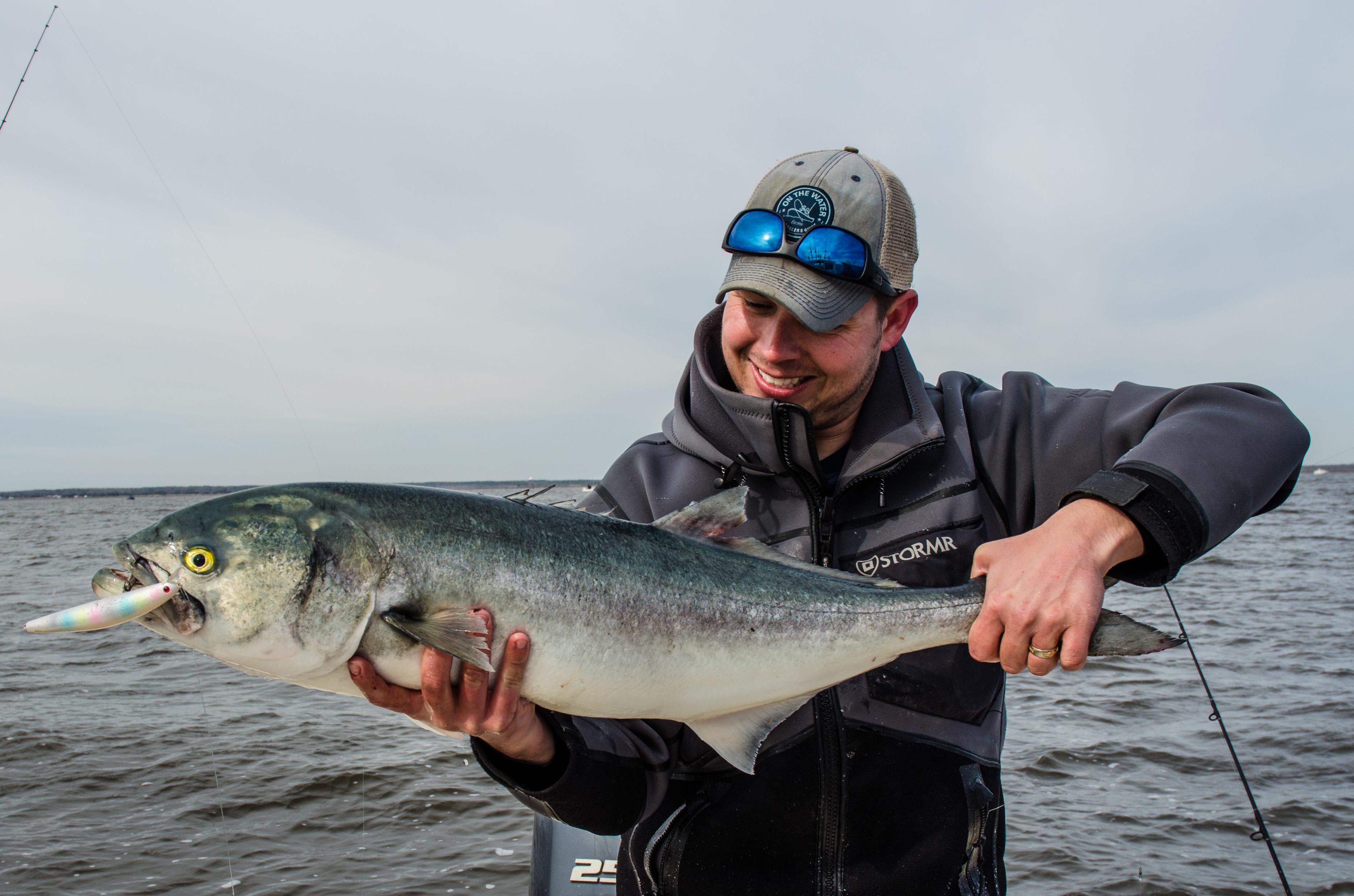 South Jersey bluefish