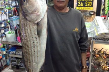 Striper fishing has been good off the Atlantic City Jetties accoridng to One Stop Bait and Tackle.
