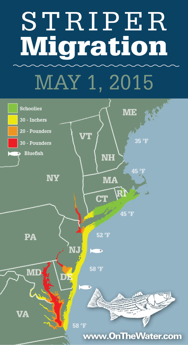 Striper Migration Map May 1 2015 On The Water