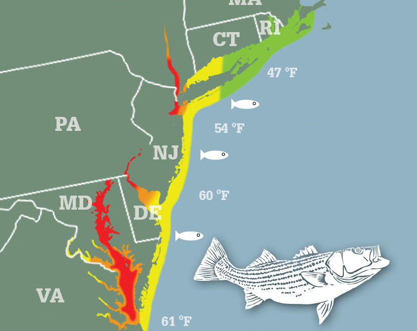 Striper migration map may 5 2015 on the water for Fishing stores nj