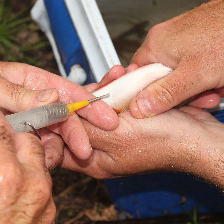 injecting-tag