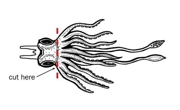 squid-step-1