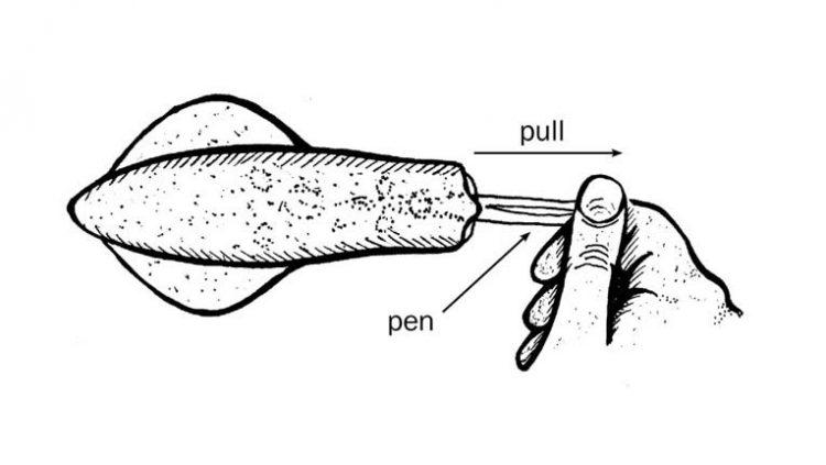 squid-step-3