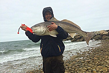 Cape Cod Red Drum