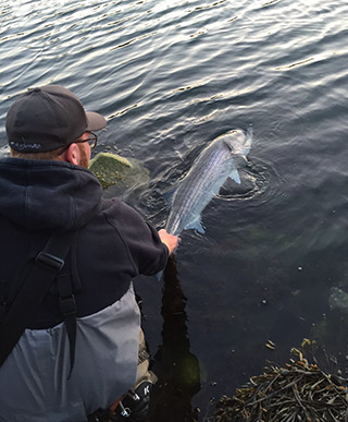 Catch And Release competitor Justin Innes releasing a nice fish.