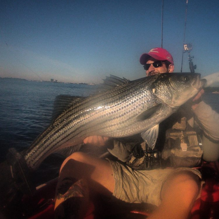A 40-pound striper that fell to a bucktail and Gulp intended for fluke!