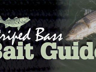 Striped Bass Bait Guide