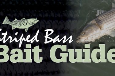 Striped Bass Bait Guide